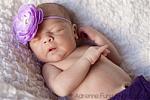 Lavender Ranuculus Skinny Headband