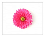Pink Gerber Daisy Flower Hair Clip
