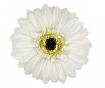 White Gerber Daisy Flower Hair Clip