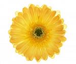 Yellow Gerber Daisy Flower Hair Clip