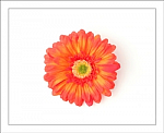 Orange Gerber Daisy Flower Hair Clip