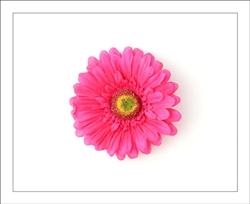 Fuchsia gerber daisy flower hair clip clippy clippies shocking pink gerber daisy flower hair clip mightylinksfo