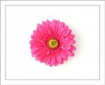 Shocking Pink Gerber Daisy Flower Hair Clip